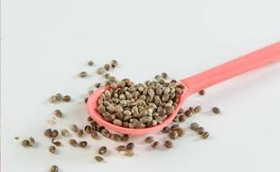 Les graines de chanvre brutes commercialisées par la start-up toulousaine V21.