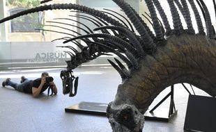 Une reconstitution du «Bajadasaurus pronuspinax» exposée au Centre culturel de la science à Buenos Aires, le 4 février 2019.