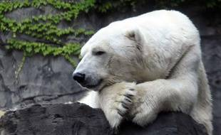 Gus, l'ours polaire du zoo de Central Park àNew York, est mort le 27 août 2013.
