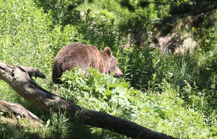 Hautes-Pyrénées: Effrayés par des grognements d'ours, deux randonneurs se réfugient dans une chapelle