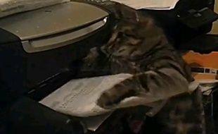 Capture d'écran de la vidéo d'un chat s'attaquant à une imprimante.