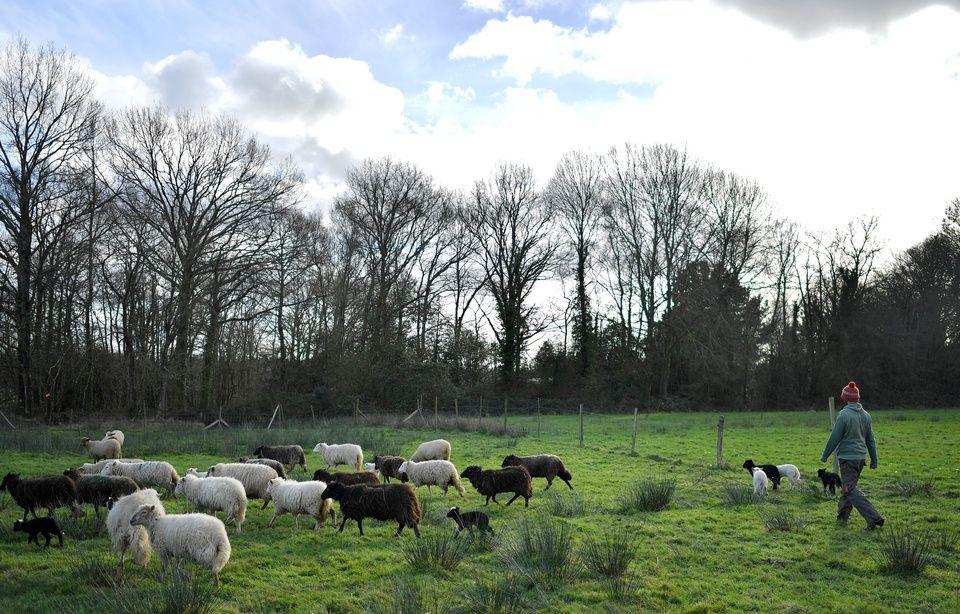 Quinze projets agricoles portés par des zadistes régularisés 960x614_zad-dame-landes
