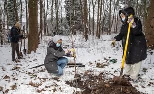 De récents parents plantent des arbres au parc Georges-Valbon de La Courneuve lors de l'opération