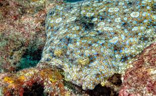 Sous l'océan, certains poissons en font tout un plat