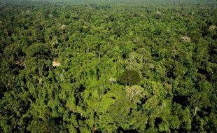 Illustration : Forêt Amérique Centrale.
