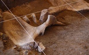 Les ossements de 14 mammouths ont été retrouvés à Tultepec au Mexique.