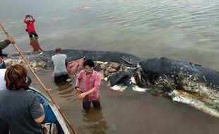 Un cachalot a été retrouvé mort en Indonésie avec du plastique dans l'estomac