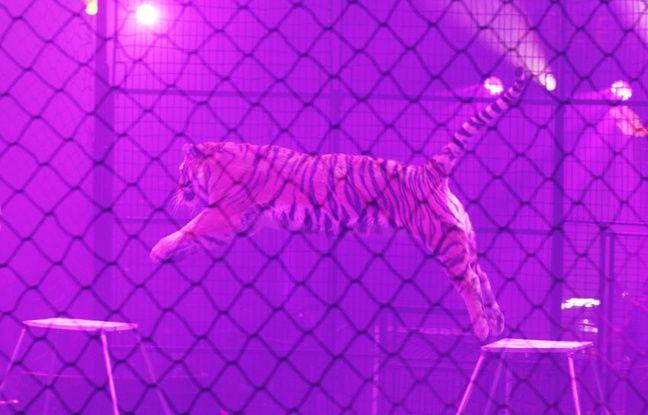 Pour le cirque Arlette Gruss,