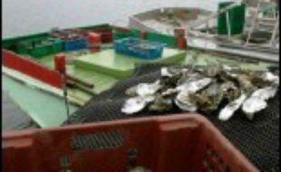 La préfecture de la Gironde a annoncé mercredi à Bordeaux la levée de l'interdiction de consommation des huîtres du bassin d'Arcachon.