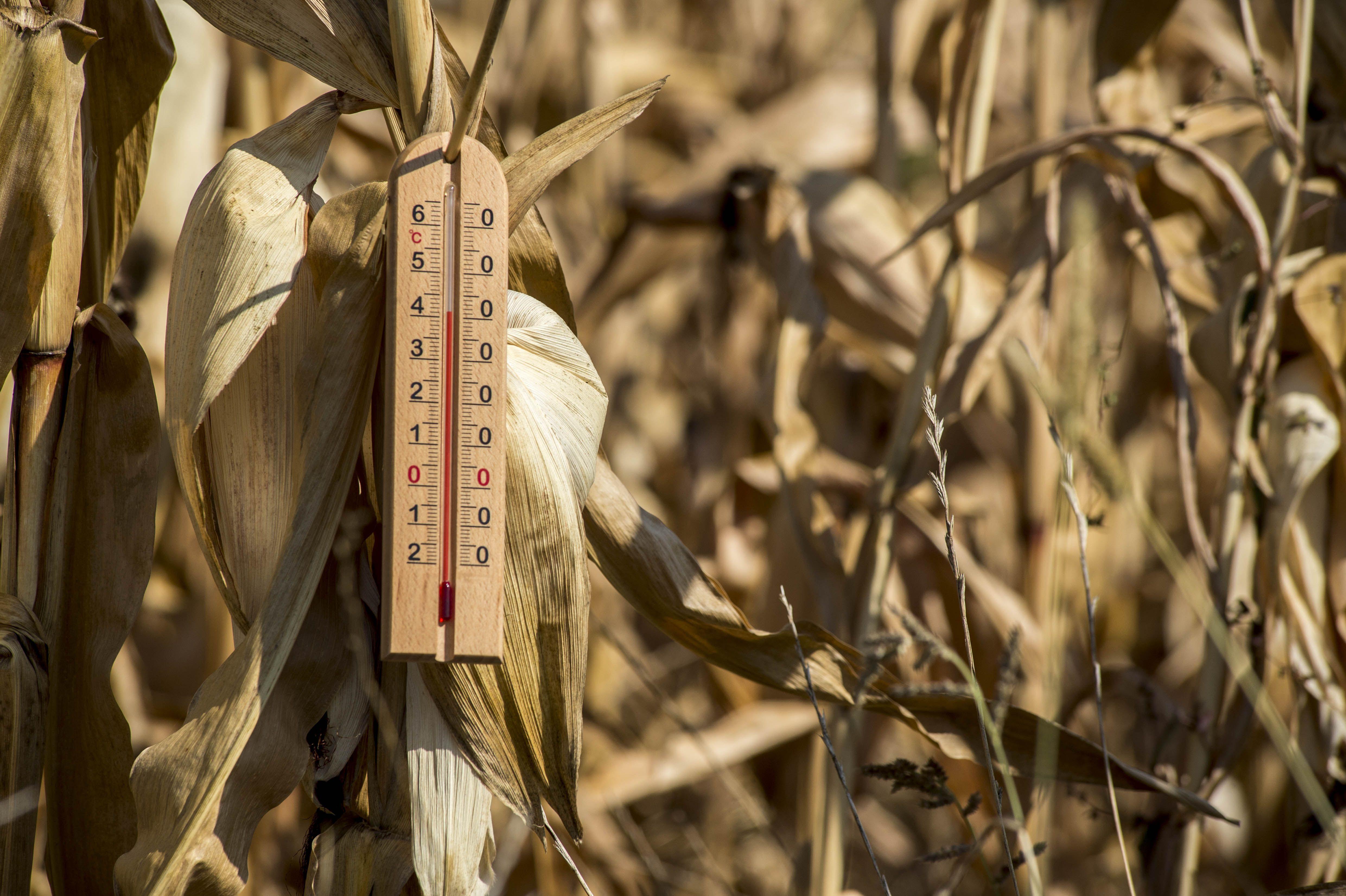 Une grande partie de la France, en particulier sur la moitié Est, risque de subir cet été une nouvelle sécheresse.