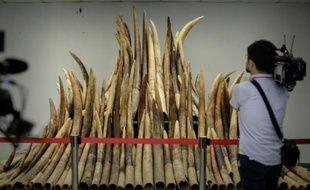 Des défenses d'éléphant exposées avant d'être incinérées par les autorités à Hong Kong le 15 mai 2014