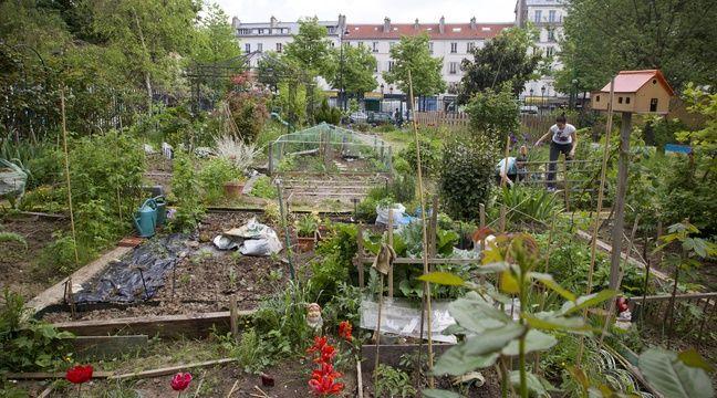 des lyonnais veulent d mocratiser le partage de jardin entre particuliers. Black Bedroom Furniture Sets. Home Design Ideas