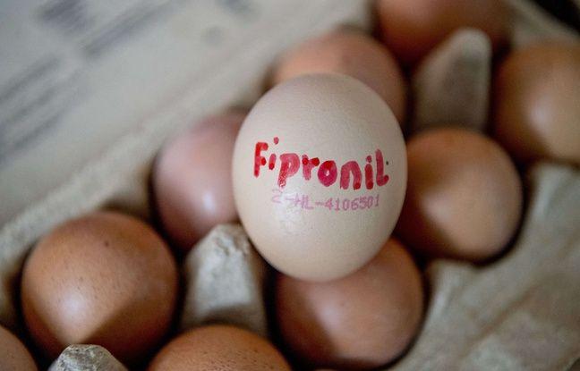 Fipronil: Des oeufs et des poules mis sous séquestre en Italie