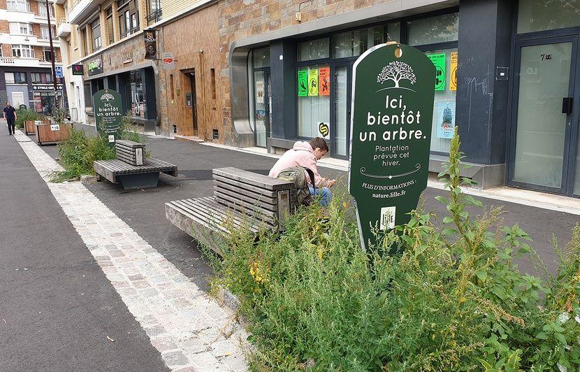 Municipales 2020 à Lille : Comment Aubry coupe l'herbe sous le pied de ses adversaires sur l'écologie