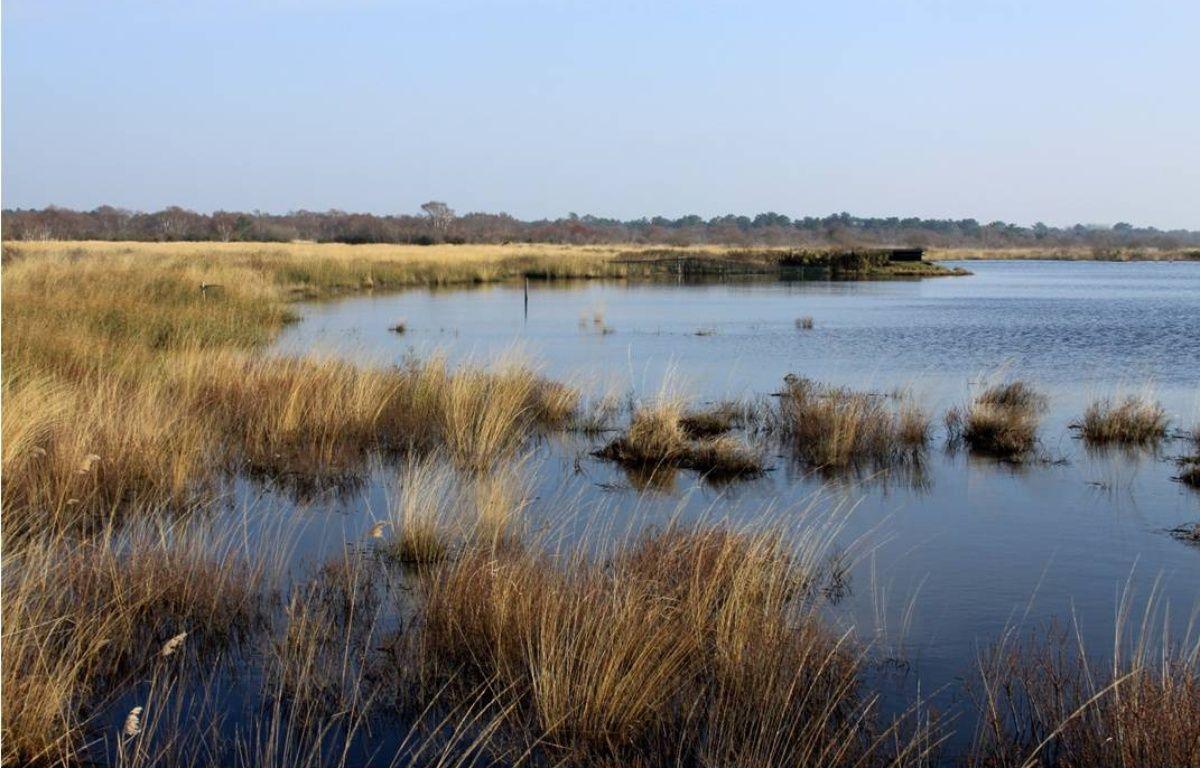 Les marais font partie des pépites du territoire médocain.  – Syndicat Pays Médoc