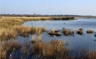 Les marais font partie des pépites du territoire médocain.