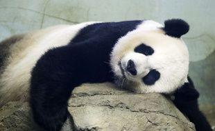 Mei Xiang a été une bonne mère, a assuré le zoo de Washington.