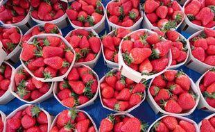 En Dordogne, les fraisiculteurs s'inquiètent pour l'avenir de leur profession, peu attractive pour les jeunes.