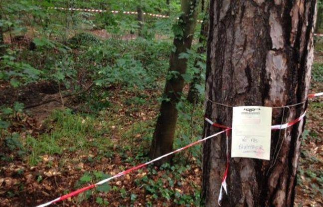 Le lieu où a été découvert un tronc humain dans le Bois de Vincennes, le 18 juin 2012.