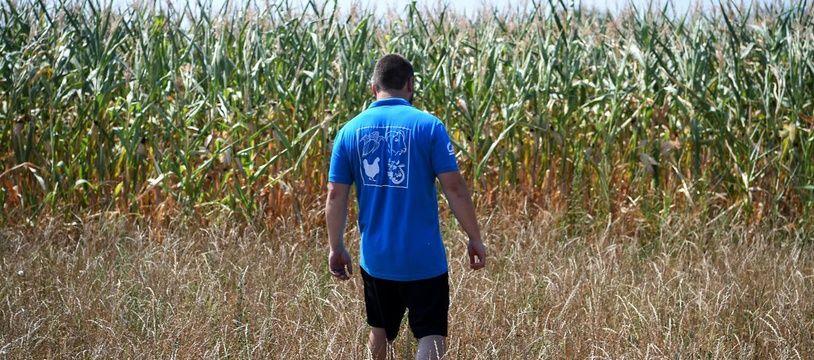 Un jeune agriculteur dans son champ de maïs (image d'illustration).