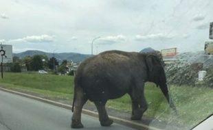 Une éléphante en virée à Clermont-Ferrand