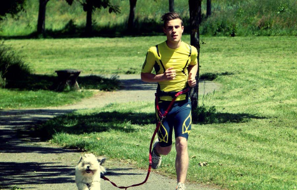 Le chien est attaché au coureur par une laisse extensible. – My Djogg