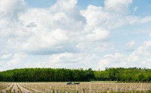 Les vignes dans le Bordelais devraient subir des modifications en raison du réchauffement climatique