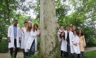 Toulouse, le 7 juillet 2014-Des étudiants veulent guérir les platanes