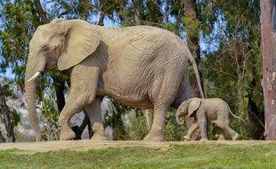 Illustration d'un éléphant, ici à San Diego aux Etats-Unis.