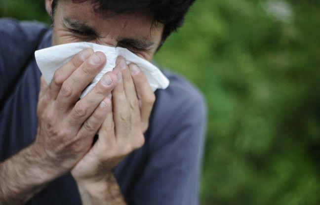m diterran e allergiques du sud les pollens de cypr s sont de retour et ils sont pas contents. Black Bedroom Furniture Sets. Home Design Ideas