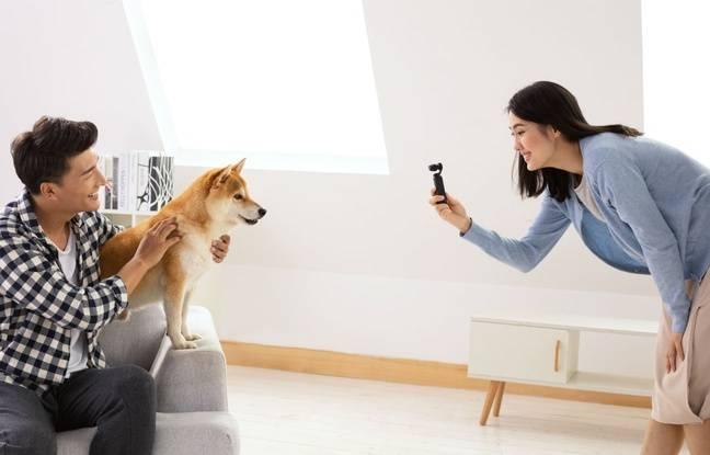 Les vidéos de chiens (et de chats aussi), plus tout à fait comme avant avec l'Osmo Pocket.