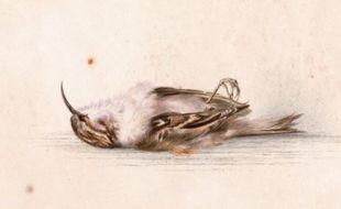 Une aquarelle représentant un petit oiseau mort et datant de 1899 a été découverte dans un ancien refuge d'explorateurs polaires dans l'Antarctique.