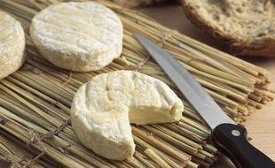 Illustration de fromages Saint-Marcellin.