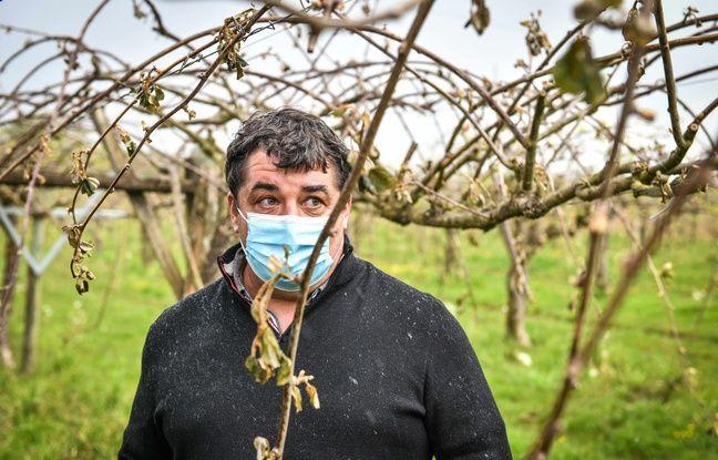 648x415 vigneron bourgogne face gel detruit recoltes