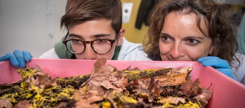 Le CNRS lance une expérience de science participative autour du blob.