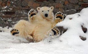 Photo d'illustration d'un ours polaire.