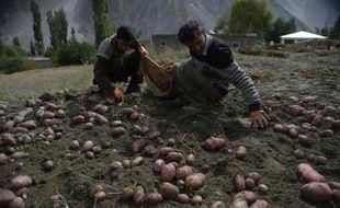 Des fermiers cultivent leurs patates dans un champ du village de Gulmit dans le nord du Pakistan le 28 septembre 2015