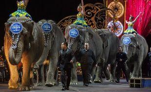 Les éléphants de cirques français pourront prendre une retraite bien méritée en Limousin.