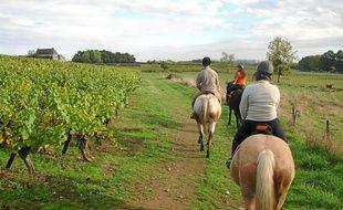 La découverte du vignoble à cheval est l'une des possibilités offertes.