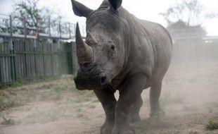 Un rhinocéros au parc national Kruger le 2 mars 2015