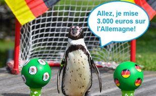 Ce pingouin aurait mieux fait de ne pas céder à l'appel du pari sportif.