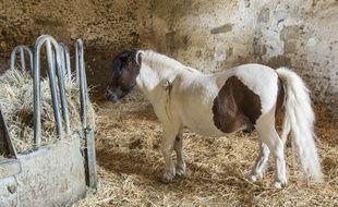 Un poney. (illustration)