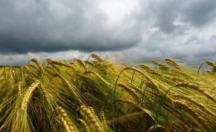 Les institutions européennes ont réussi mercredi à s'entendre pour rendre la Politique agricole commune (PAC) plus verte et plus équitable, tout en laissant en suspens des questions liées au controversé budget pluriannuel de l'UE, a annoncé la présidence irlandaise de l'Union européenne.