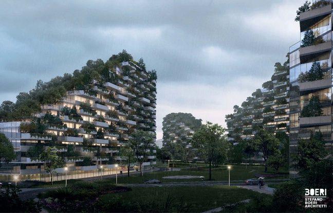 Les arbres absorberont les nuages de pollution