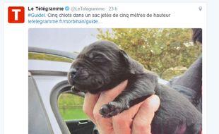 Le 19 octobre 2016 à Guidel (Morbihan), un promeneur a découvert au bord de l'estuaire de la Laïta un sac plastique contenant cinq très jeunes chiots ayant manifestement été à l'eau depuis un pont haut de cinq mètres.
