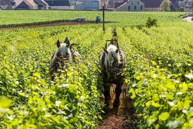 Une démonstration de labour avec des chevaux pourrait avoir lieu.